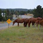 Wild Horses Ruidoso