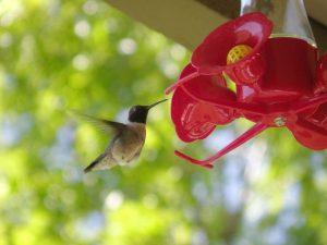 ruidoso birding